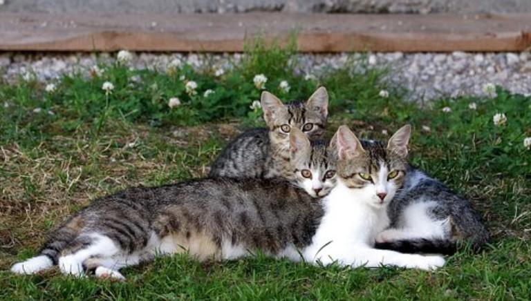 Italiani accoglienti con animali, ma randagismo resta emergenza
