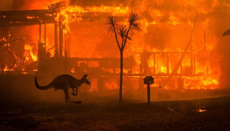 #nonlasciamosolonessuno: Ong australiane in soccorso degli animali