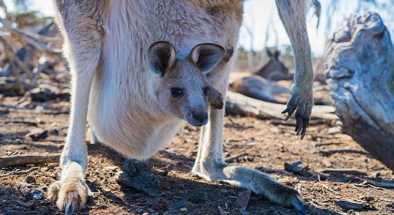 Good news for Australia and its animals: Versace bans kangaroo leather!
