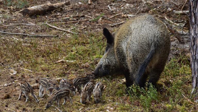 Caccia: il nostro bilancio di un'altra stagione di morte per animali e persone