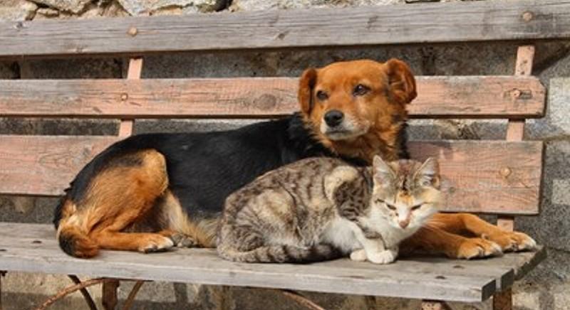 Milano, approvato nuovo Regolamento Tutela Animali: i pro e i contro