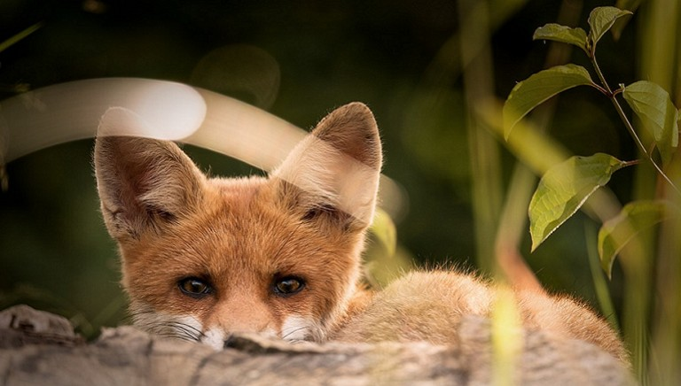 Bolzano: confermate condanne amministratori per uccisione di fauna
