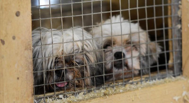 Traffico cuccioli, Parlamento UE chiede stop al commercio illegale di cani e gatti