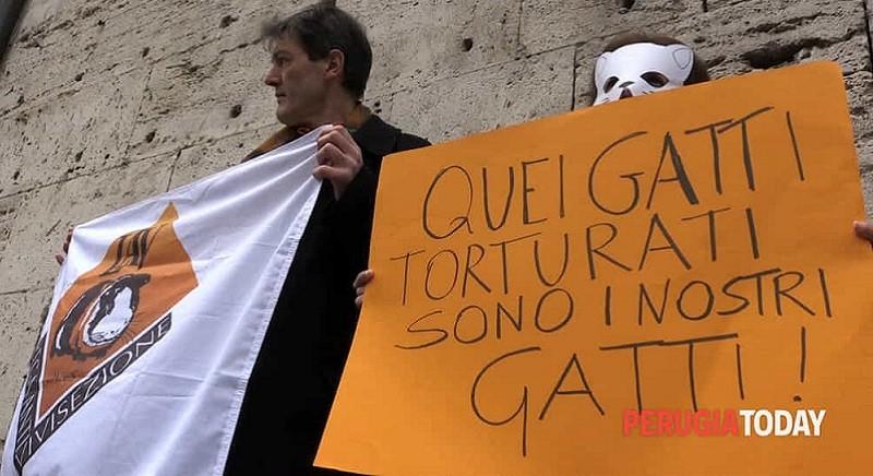 Killer dei gatti di Perugia: Cassazione conferma condanna a 4 mesi