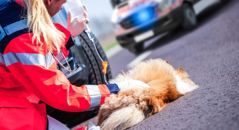Soccorso animali vaganti e feriti, Regione Lazio isitituisce numero unico