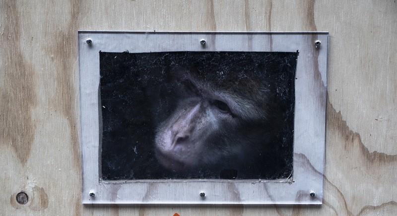 Giustizia per Buddy, la bertuccia che abbiamo salvato dal traffico di specie