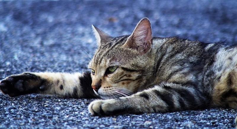 Corte d'Appello di Brescia conferma condanna per l'uccisione di due gatti