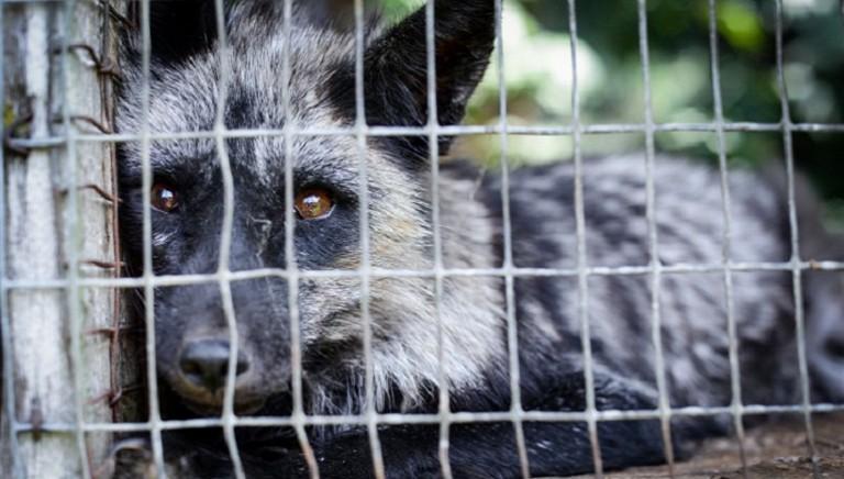 COVID-19 e animali selvatici: abbiamo scritto all'Ambasciatore cinese in Italia