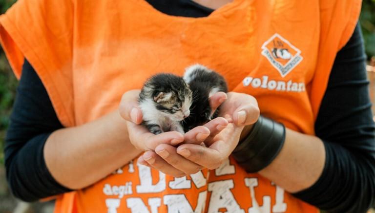 Coronavirus e assistenza agli animali: attivo il front desk LAV per l'emergenza