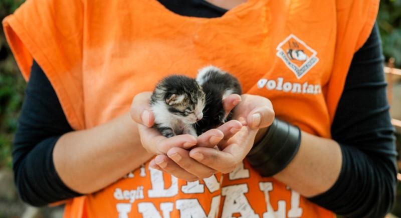 Coronavirus e assistenza agli animali: attiviamo un front desk d'emergenza