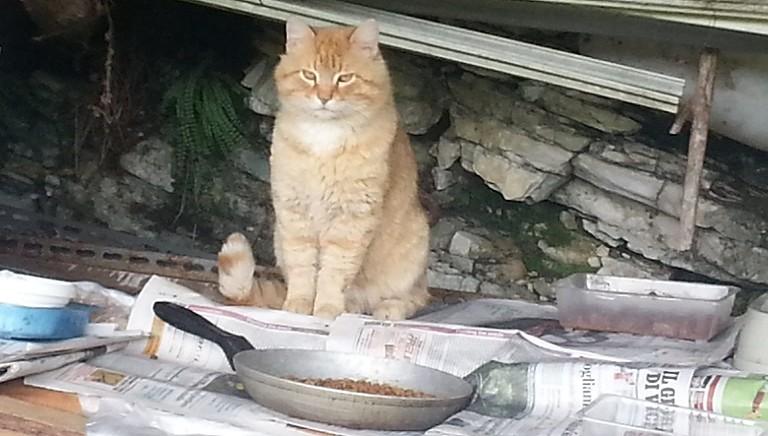Storie dal front desk. 2/Fermati recandosi ad aiutare gatti. LAV interviene