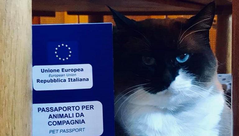 Storie dal front desk. 3/Deve tornare in Svizzera, ma non senza i suoi gatti!