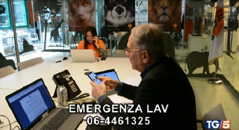 Coronavirus e assistenza agli animali: le FAQ per orientarsi nell'emergenza