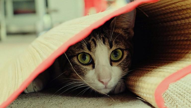 Storie dal front desk. 4/Famiglia ricoverata, gatto resta chiuso in casa vuota