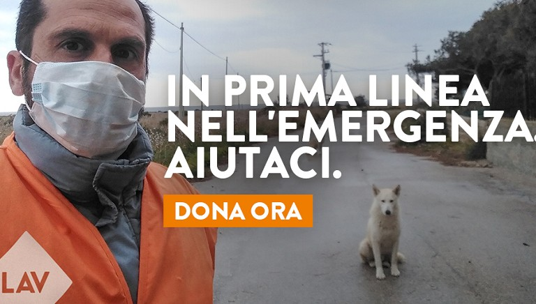 In prima linea nell'emergenza. Tu resta a casa, ma salva gli animali. Aiutaci.
