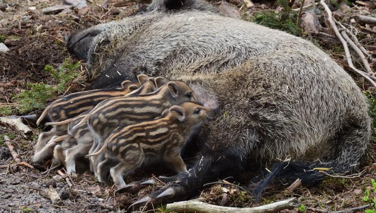 Emila Romagna insiste su Piani controllo fauna. Intervengano Prefetti