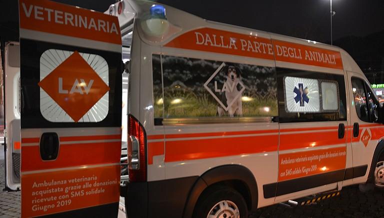 In prima linea nell'emergenza: attiva a Roma la nostra ambulanza veterinaria