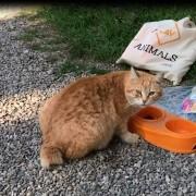 Un gatto di colonia accudito da LAV Modena