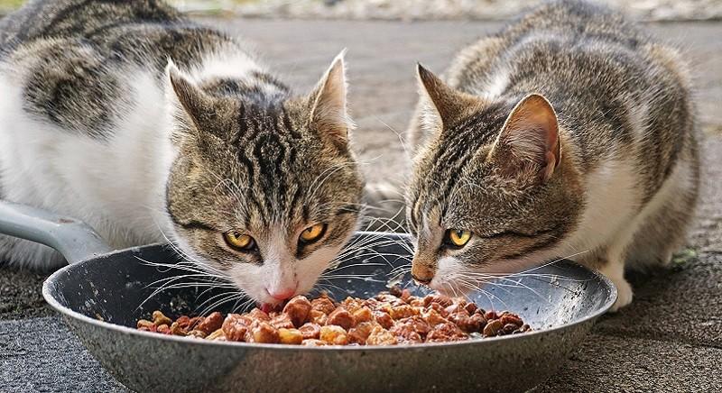 Accudire gli animali al tempo del Covid19: nuova Circolare del Ministero