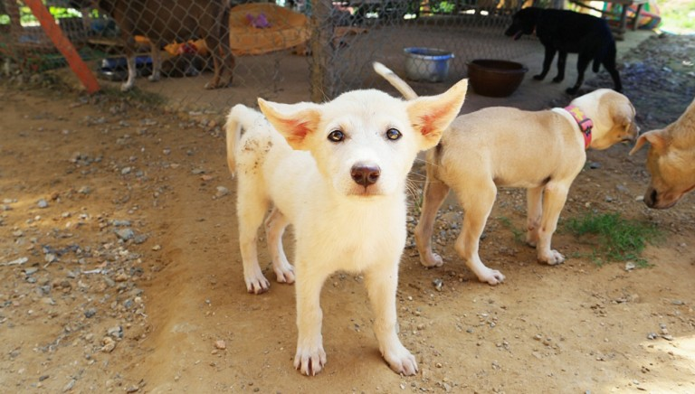 Nuovo DPCM: accudimento animali rimane diritto-dovere