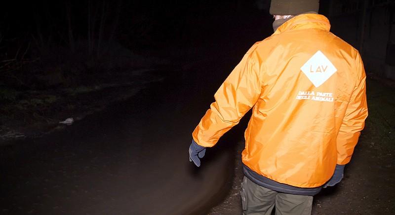 """Un nostro investigatore accanto a un """"fiume"""" di liquami"""