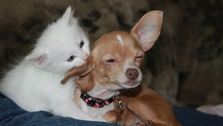 Il Diritto ai tempi del Covid-19: animali familiari, da proteggere e rispettare