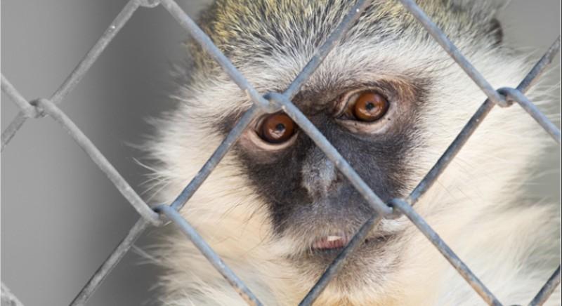 Covid-19: i Centri di Recupero e i loro animali hanno bisogno del tuo aiuto