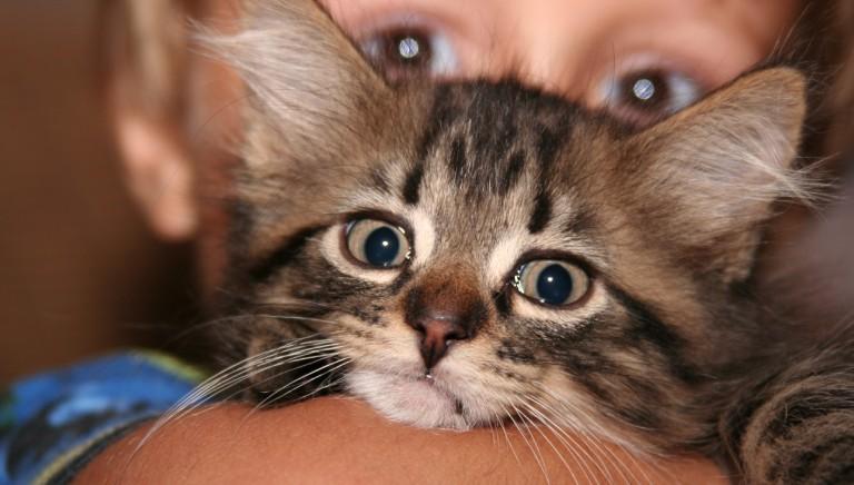 Animali familiari e Covid19, ISS conferma: non contagiosi per l'uomo