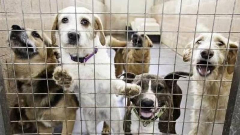Covid, Associazioni: Governo sblocchi le adozioni di cani e gatti!