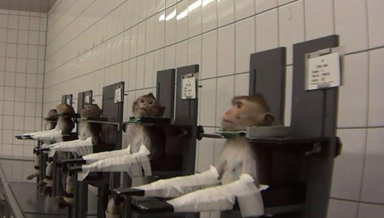 """Giornata mondiale animali """"da laboratorio"""": fermare strage silenziosa"""