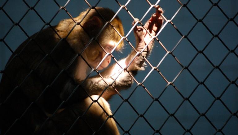 La nostra nuova condizione di animali in gabbia