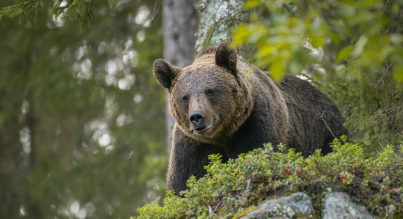 La liberta' di essere un orso