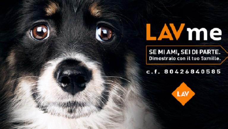 Se ami gli animali, sei di parte. Dimostralo con il tuo 5XMille a LAV!