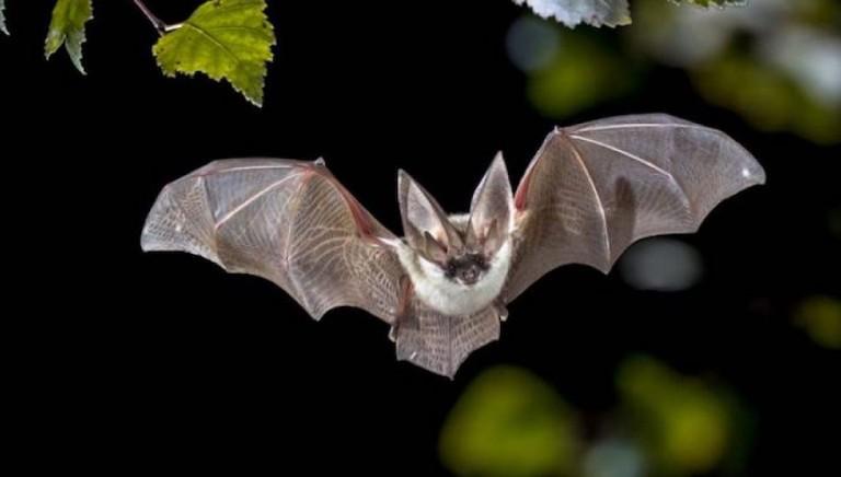 I pipistrelli non sono un rischio: appello a Ministro Costa contro fake news