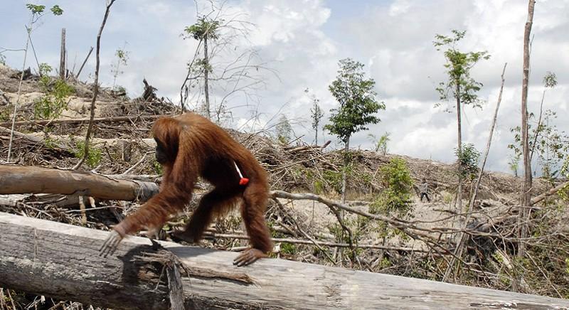 Giornata Biodiversita': nel rapporto con gli animali, #noncomeprima