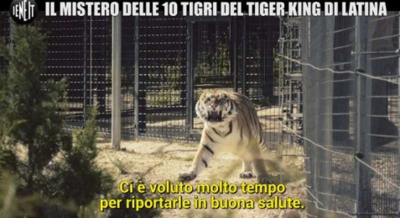 Traffico di tigri denunciato da LAV, inchiesta di Giulia Innocenzi a Le Iene