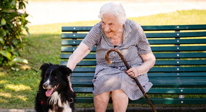 Covid19, Fase 2 e animali familiari: proposte per aiutare i piu' deboli