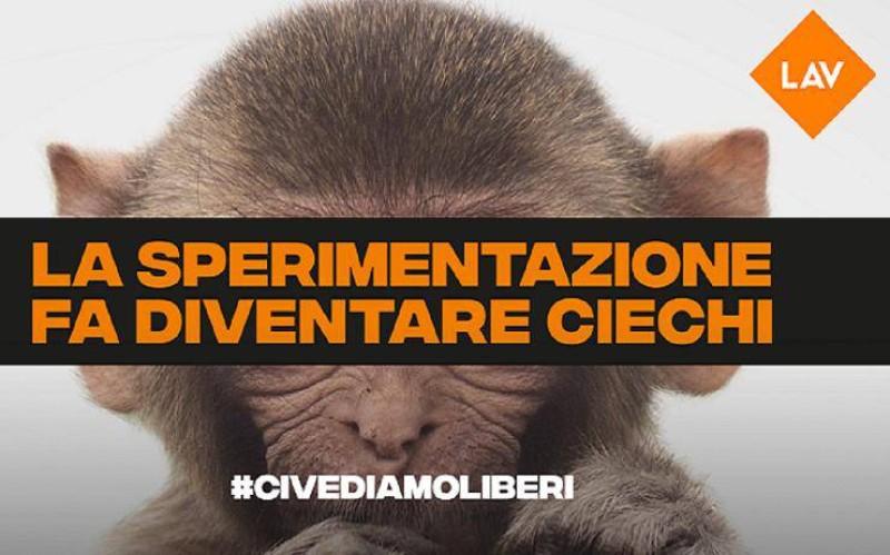 Tar Lazio su macachi progetto Light-up: LAV ricorrera' in Consiglio di Stato