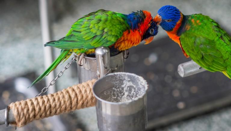 No a animali esotici come pet: lo pensa l'86 per cento dei cittadini italiani