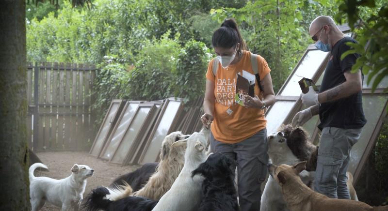 #nonsonounlusso: tagliamo i costi per gli animali di famiglia. Firma la petizione
