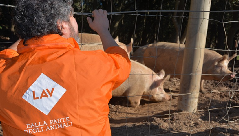 In Gorgona Island the dream lives again: animal-rescue operations are starting