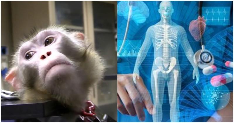 Ricerca senza animali: speranze dal progetto COMBINE dell'Universita' di Catania