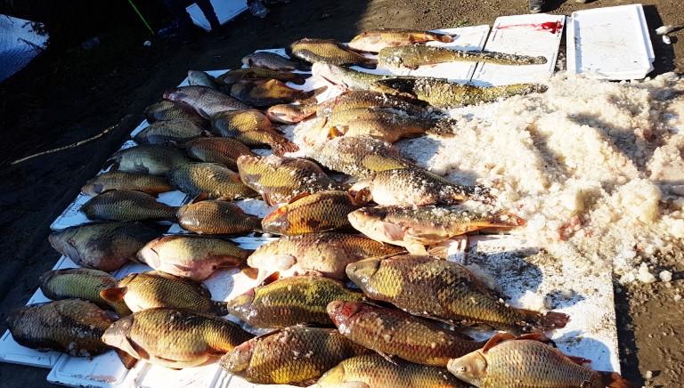 La pirateria dei fiumi: l'emergenza grave e sconosciuta del bracconaggio ittico
