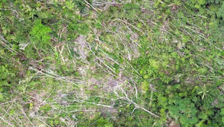 Deforestazione e zoonosi: la distruzione che ci espone a rischi sanitari