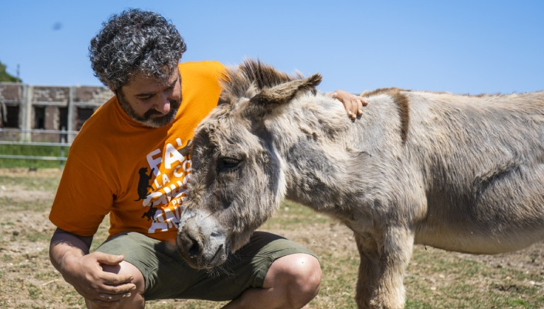 On Gorgona prison-island, we rescued the first 85 animals saved from slaughtering