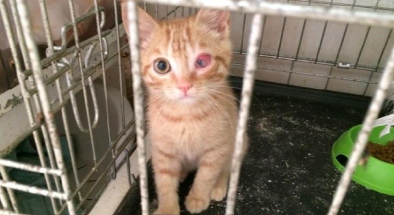 Un gattino del rifugio sequestrato nel 2015