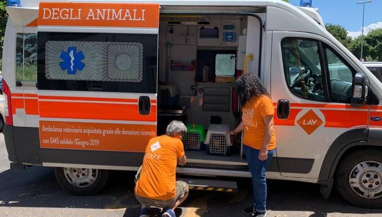 In azione a Putzu Idu (Sardegna): settimana di sterilizzazione gatti liberi