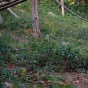 Una bertuccia del Progetto Born to be Wild a Semproniano