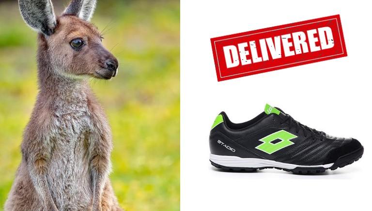 Lotto denunciata negli USA per la vendita di scarpini di canguro dove vietato!
