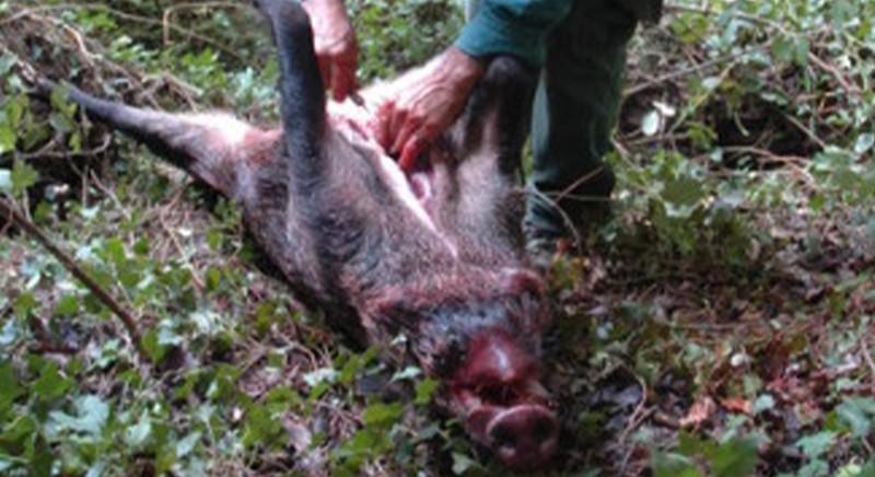 Covid e rischi sanitari: caccia ed eviscerazioni come i wet market
